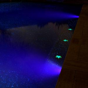 starter pools of texas